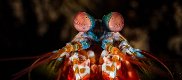Using the Eyes of Killer Shrimp to Design A Super Camera
