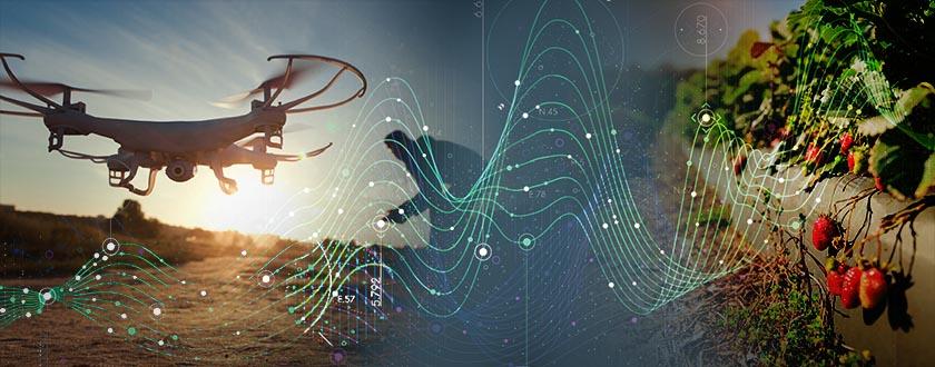 Drone Versus Spider Mite