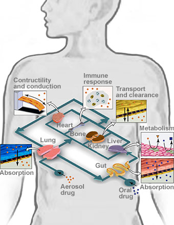 7 Human Organs on One Chip