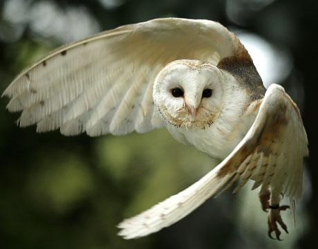 Quiet As An Owl