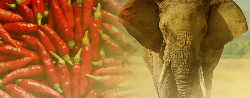 No BS: Engineering Elephant Dung to Help African Farmers