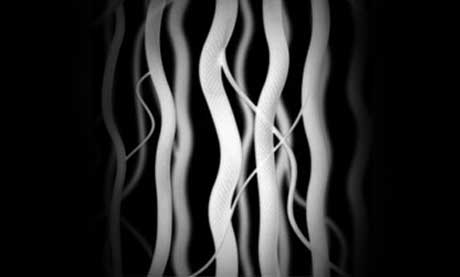 Nanotubes Ribbons