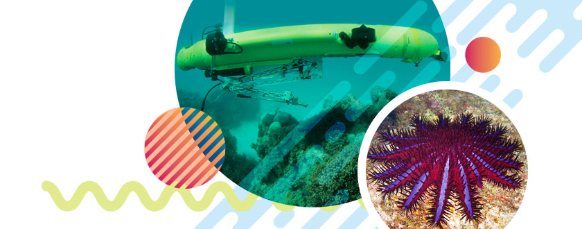 Underwater Drone Hunts Coral-Eating Crown-of-Thorns Starfish