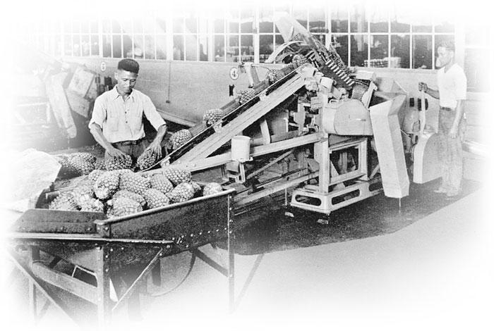 167 Ginaca Pineapple Processing Machine
